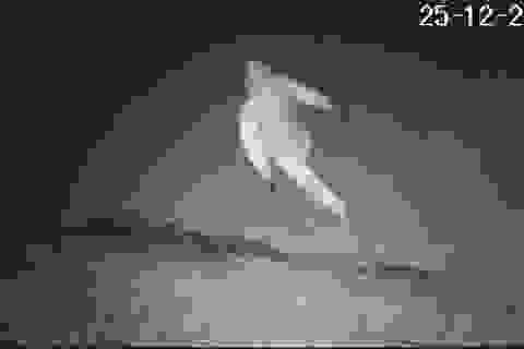 Hà Nội: Xem camera hàng xóm, mới biết nhà mình bị trộm