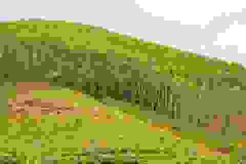 """Bình Định: """"Ưu ái"""" khoán đất bảo vệ rừng sản xuất cho người thân?"""