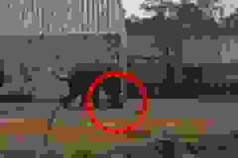Kinh hoàng voi điên giẫm chết nhân viên sở thú Trung Quốc