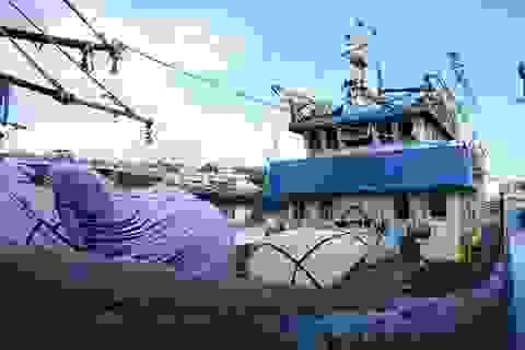 """Quảng Ngãi: """"Đắp chiếu"""" tàu vỏ thép trị giá hàng chục tỷ đồng"""