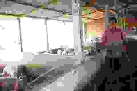 Từ 500 con gà, nông dân đất võ Bình Định thu về 12 tỷ đồng/năm