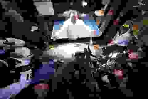 Hơn 41 tỷ đồng cho một con cá ngừ vây xanh ở Nhật Bản