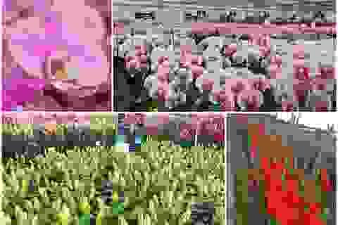 Hành trình hơn một thập kỷ với khát vọng đưa hoa Việt Nam vươn tầm thế giới của các nhà khoa học
