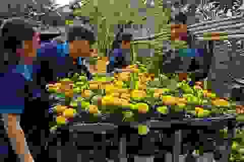 Chăm được 2.000 chậu hoa, con trai xin hết đem bán để hỗ trợ Tết cho người nghèo