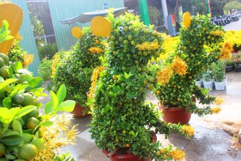Độc đáo quất bonsai hình chuột, quả chi chít ở chợ Tết