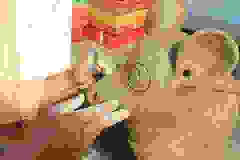 Năm Canh Tý, về làng gốm 500 năm tuổi xem nghệ nhân nhào đất nặn chuột
