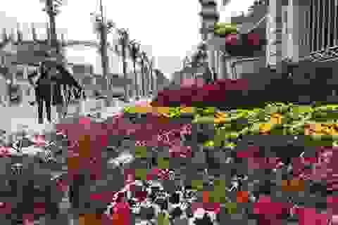 Ấn tượng những đường hoa rực rỡ sắc màu đón Tết ở thành Vinh
