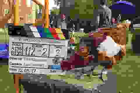 Mất một con gà, đưa nhau ra tòa, chủ gà được đền bù... 16 triệu đồng
