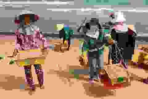 """Trúng """"lộc"""" biển, ngư dân kiếm tiền triệu mỗi ngày dịp cận Tết"""