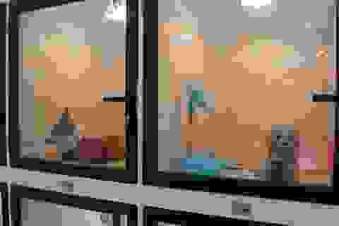 """Người Hà Nội gửi thú cưng vào """"khách sạn"""" để về quê ăn Tết"""