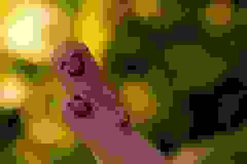 Suy nghĩ tích cực sẽ giúp bạn hạnh phúc hơn
