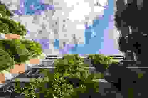 """Tòa nhà 5 tầng """"siêu độc"""" phủ kín cây xanh ở Đà Nẵng, được báo Tây hết lời khen ngợi"""