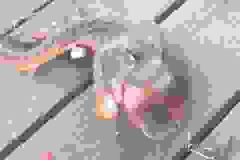Bắt được quái vật biển 3 xúc tu