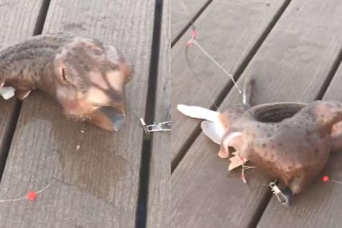 Xôn xao sinh vật biển kỳ lạ bị bắt ở New York