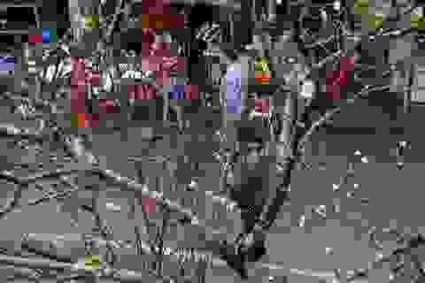 Độc đáo thú chơi hoa đào rằm tháng giêng của người Hà Nội