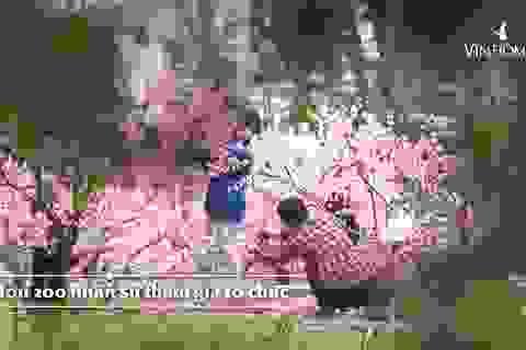 Những điều chỉ có trong lễ hội hoa xuân trăm tỷ ở Vinhomes Smart City