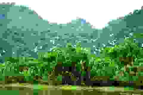 Phượt bộ khám phá vườn chim Thung Nham giữa vùng di sản Tràng An