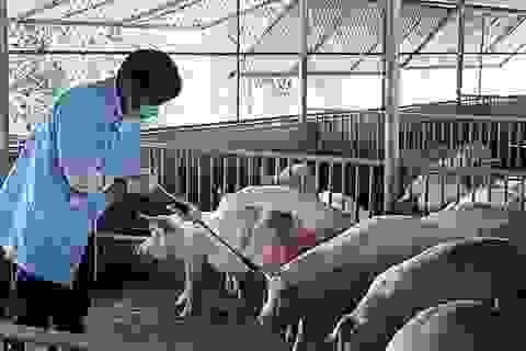 Việt Nam đề nghị Hoa Kỳ giúp sản xuất vắc xin dịch tả lợn châu Phi