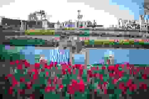 Valentine ngọt như mật tại thiên đường tulip Sun World Ba Na Hills