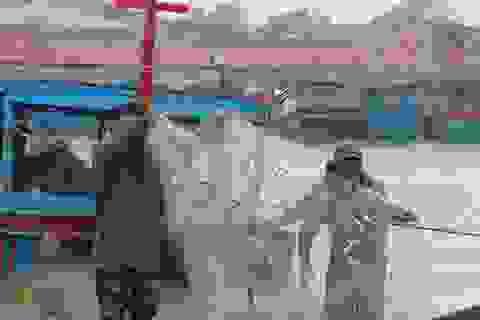 Ngư dân Quảng Bình trúng đậm cá trích ngày mở biển