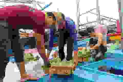 Phú Yên: Hàng trăm tàu cá của ngư dân háo hức vươn khơi đầu năm