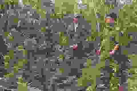 Người đàn ông trồng cần sa trên rẫy cà phê, tích mìn tự chế trong nhà
