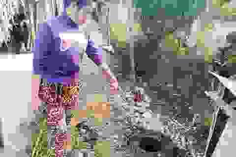 Diễn tiến ly kỳ vụ chặt cây trên đất đã mua suýt ngồi tù tại Kiên Giang