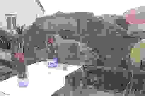 Độc đáo khu nghĩa trang thờ hơn 100 con cá Ông