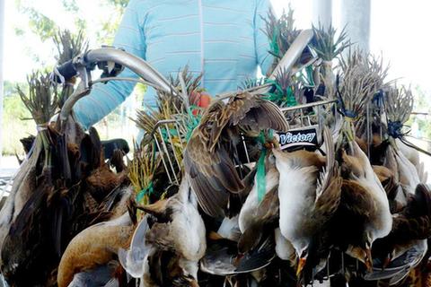 Cảnh báo nhiều loài động vật mang mầm bệnh có thể lây sang người