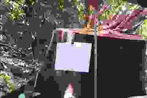 Đề nghị điều tra việc hàng chục mét khối gỗ bị bỏ trong rừng