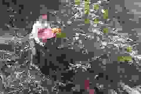 Điều tra vụ dùng súng đe dọa tổ công tác khi đang vận chuyển gỗ lậu