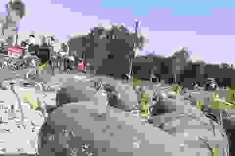 Dưa hấu có nguy cơ chín rụng ngoài đồng vì dịch covid-19