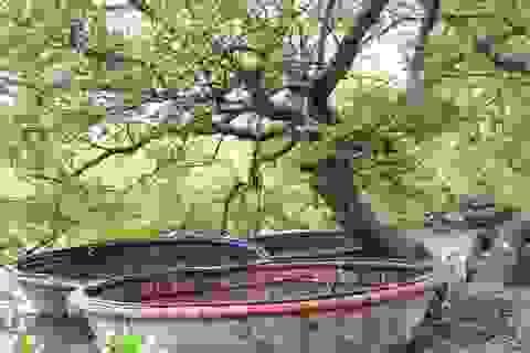 """Khám phá rừng ngập mặn nguyên sinh Tam Giang, """"báu vật"""" của Núi Thành"""