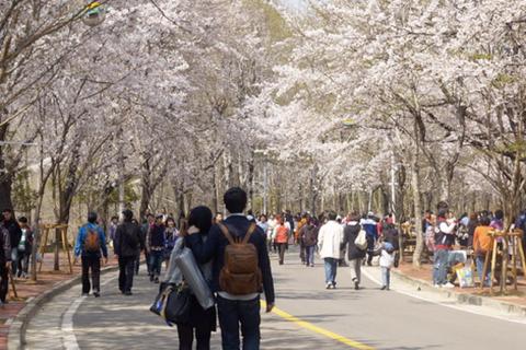 Khách Việt đồng loạt hủy tour đến Hàn Quốc do lo sợ dịch bệnh