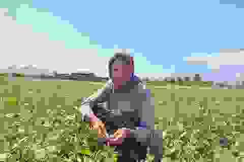 """Dân Ninh Thuận bỏ lúa, trồng đậu xanh để """"chạy"""" hạn"""