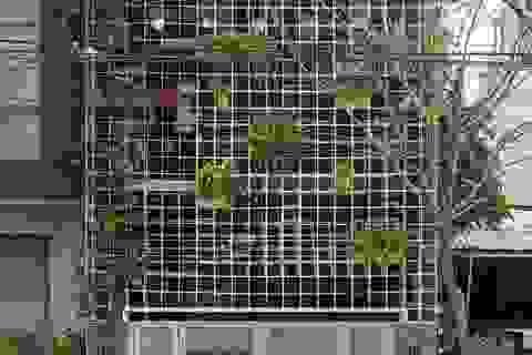 Bất ngờ nhà xưởng cũ hoang tàn ở Đà Nẵng đẹp như khách sạn sau cải tạo