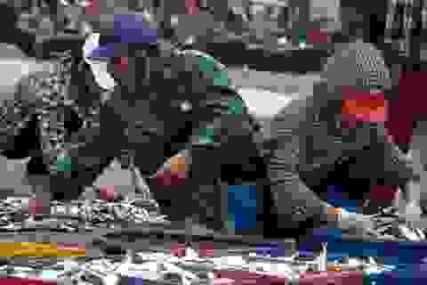 """Thanh Hoá: """"Hốt bạc"""" mùa cá trích ở Sầm Sơn"""