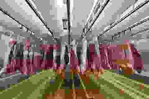 Giá thịt lợn cao, Bộ Nông nghiệp mong người dân ăn thực phẩm khác thay thế