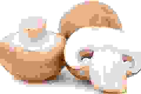 Vì sao nấm mỡ có tác dụng ngăn ngừa ung thư?