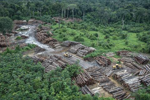 Rừng nhiệt đới trên thế giới đang mất khả năng hấp thụ carbon