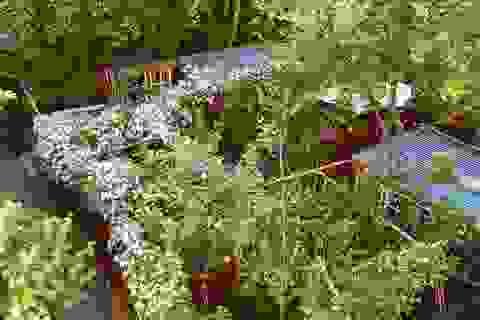 """Ngắm vườn cây đủ hoa trái gây """"sốt"""" của nhà thiết kế thời trang ở Đan Mạch"""