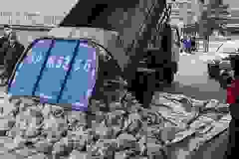 Dùng xe rác chở thịt lợn cho vùng bị cách ly, quan chức Vũ Hán mất chức