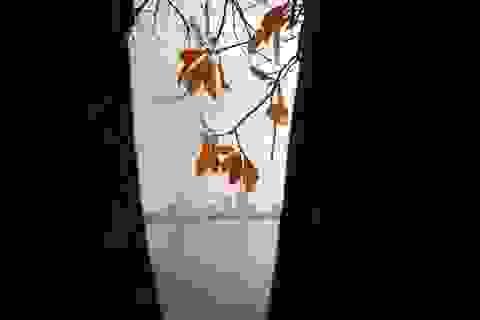 Hà Nội: Ngắm hồ Tây đẹp lãng mạn vào mùa cây thay lá