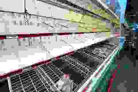 """Đổ xô """"vét"""" hàng siêu thị ở Mỹ và Anh vì Covid-19"""