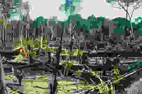 Rừng mưa Amazon sẽ biến mất chỉ trong vòng 50 năm nữa