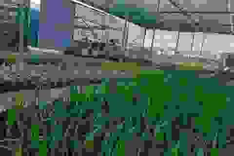 Apec Group bước chân vào lĩnh vực nông nghiệp hữu cơ