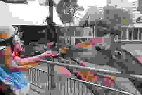 Vườn thú lâu đời nhất Việt Nam đóng cửa tránh dịch bệnh Covid-19
