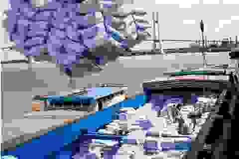 Thủ tướng: Phải xem xét kỹ lưỡng, thận trọng việc xuất khẩu gạo!