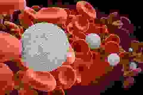 Hy vọng mới trong việc sử dụng máu cuống rốn để điều trị ung thư