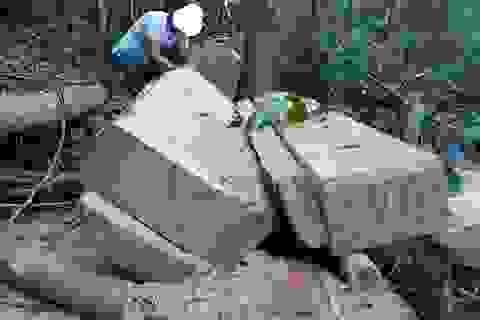 Khởi tố vụ phá rừng phòng hộ nghiêm trọng sau phản ánh của Báo Dân trí!